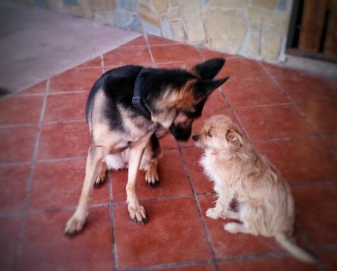 Hundepension, Doghotel, Cuidador de Perros, Residencia Canina Rasselbande