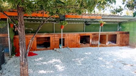 Casa de perros